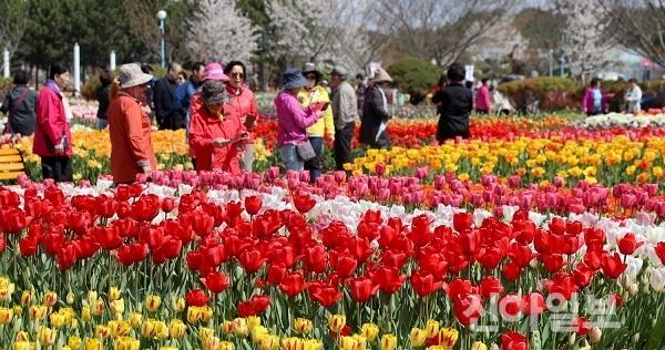 지난해 '태안 세계튤립 꽃 축제' 모습. (사진=태안군)